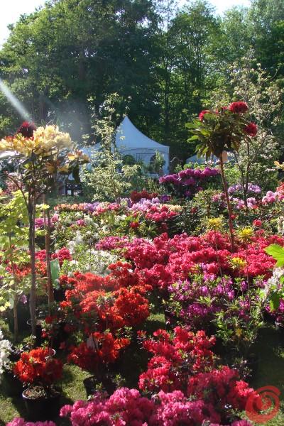 Piante per il giardino in vendita alla fiera di Beervelde
