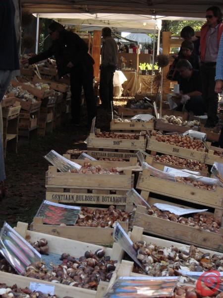 I bulbi in vendita alla fiera di giardinaggio di Beervelde