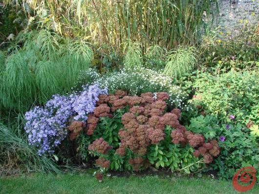 Vista autunnale di una composizione di piante perenni