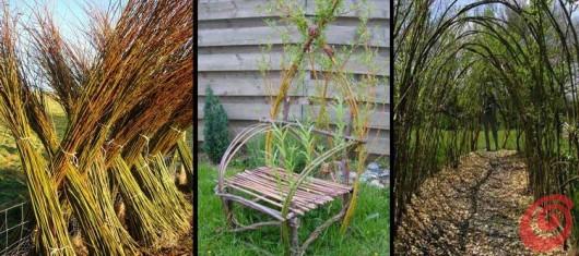 Vrbova senčnica