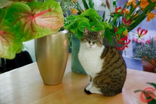 Un ospite inatteso nel negozio del fiorista Jakoncic