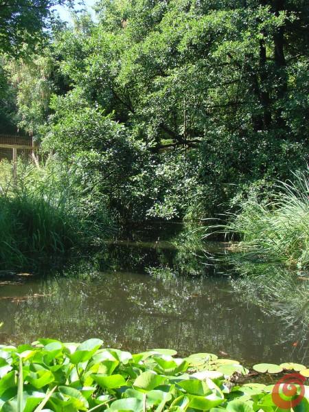 Botanični vrt v Ljubljani 200 let
