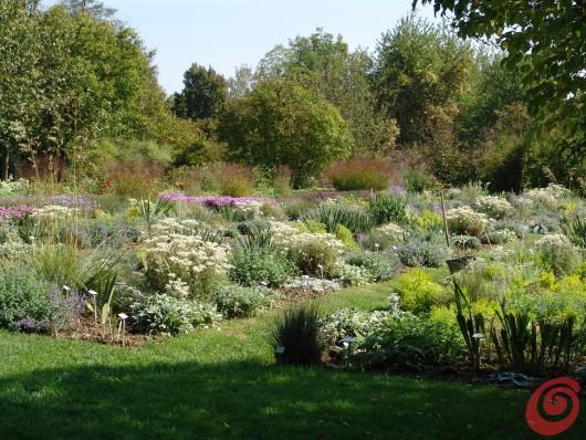 Le piante perenni danno il meglio di sé proprio in estate