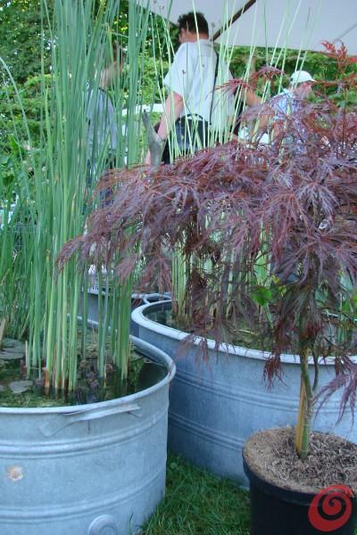 vodni vrt