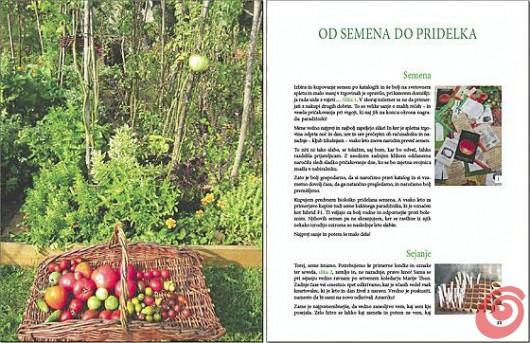 Paradižnik z mojega vrta, avtorica Slavka Ilich