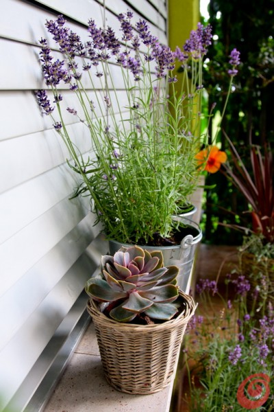 La terrazza estiva, decorata con le piante, i cuscini, gli oggetti vintage e le lanterne