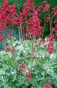 Vrt v lončkih Jesenske zasaditve