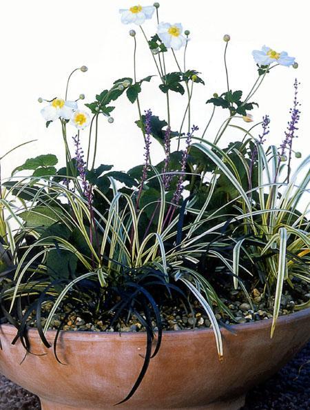 Vrt v lončkih: Jesenske zasaditve