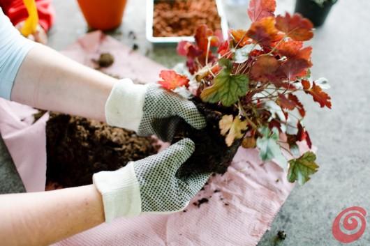 Il rinvaso delle piante d'appartamento, i consigli passo dopo passo