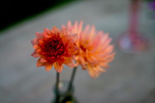 composizioni floreali fai da te per ogni giorno