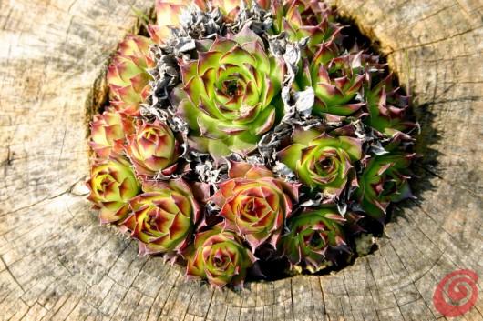 Decorazioni e complementi fai da te per il giardino