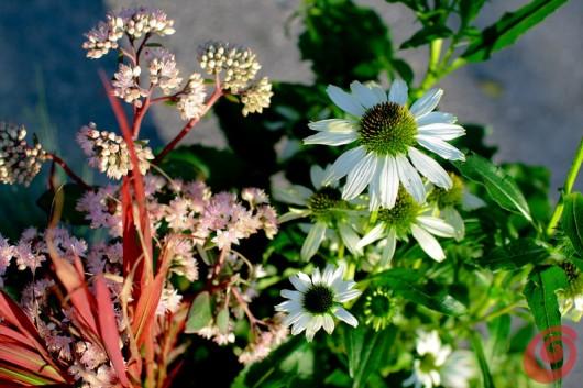 composizioni floreali per le fioriere autunnali