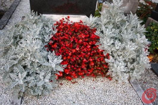 composizioni floreali e piante per il cimitero - crisantemi e molto altro ancora