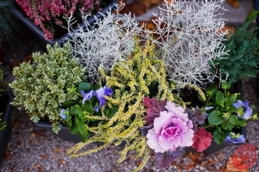 Giardino e terrazzo le composizioni invernali casa e trend - Fiori da esterno primaverili ...