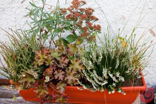 Giardino e terrazzo le composizioni invernali casa e trend - Piante fiorite invernali da esterno ...