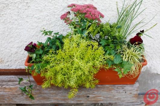 composizioni floreali per le fioriere invernali: decorazioni balcone, terrazzo, davanzale