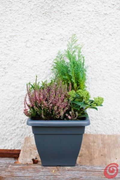 Giardino e terrazzo le composizioni invernali casa e trend - Composizione giardino ...