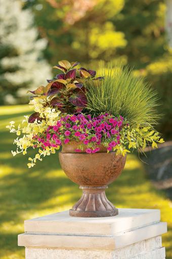 Il giardino in una fioriera, 3a parte: labbinamento dei vasi e ...