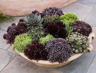 Il giardino in una fioriera 3a parte l 39 abbinamento dei for Piante da fioriera