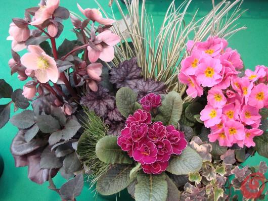 composizioni floreali per balcone, terrazzo e davanzale, idee, consigli, cure e errori da evitare