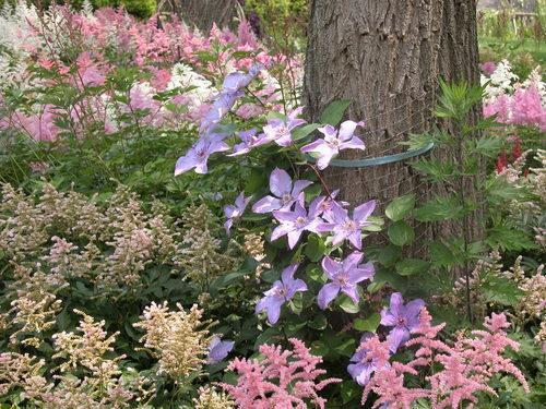 Il giardino in una fioriera, 4a parte: giocare con la struttura e i colori