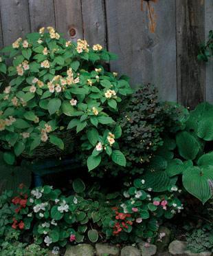 Il Giardino In Una Fioriera 8a Parte Le Zone In Ombra Casa E Trend