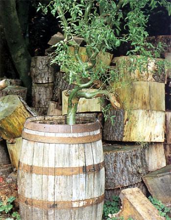 Il giardino in una fioriera, 3a parte: l'abbinamento dei vasi e delle piante