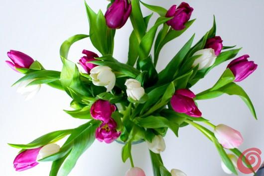 I tulipani in vaso: come farli durare a lungo? Coltivazione, cura e manutenzione del tulipano.