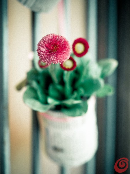 Riciclare e decorare: dei barattoli da conserva e delle margherite per abbellire l'ingresso. Decorazioni primaverili per la porta o la finestra