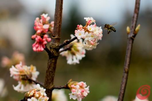 La primavera sta sbocciando