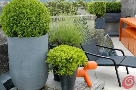 Il giardino in fioriera 17: alberi e arbusti in vaso