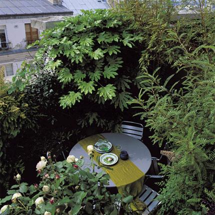 Il Giardino In Fioriera 18 Alberi E Arbusti In Vaso Casa E Trend