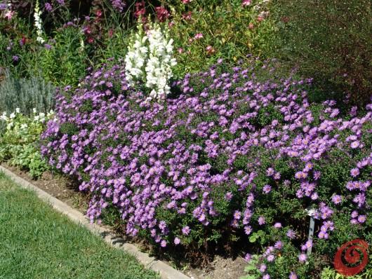 Piante perenni in giardino i consigli per coltivarle 5 - Piante basse perenni da giardino ...