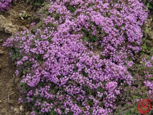 Piante perenni in giardino i consigli per coltivarle 6 for Piante verdi perenni da giardino