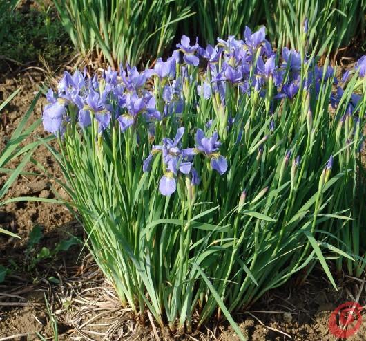 L'esperta Jožica Golob Klančič ci consiglia di settimana in settimana come coltivare e curare al meglio le piante perenni. Che cosa piantare in un terreno stagnante?