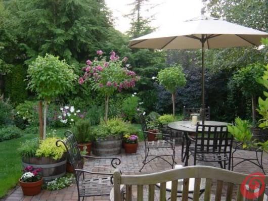 il giardino in fioriera 18 alberi e arbusti in vaso