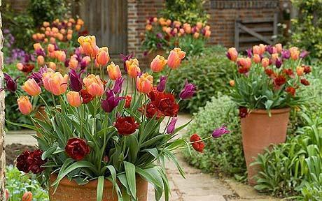 Il giardino in fioriera 14: le composizioni di piante primaverili per addobbare gli ingressi