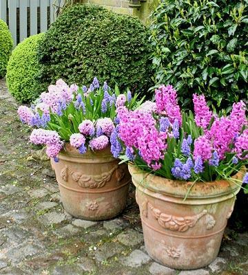 Il giardino in fioriera 14 le composizioni di piante for Piante per ingresso esterno