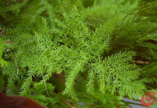 Quali piante scegliere per arricchire di verde i nostri mazzi di fiori?