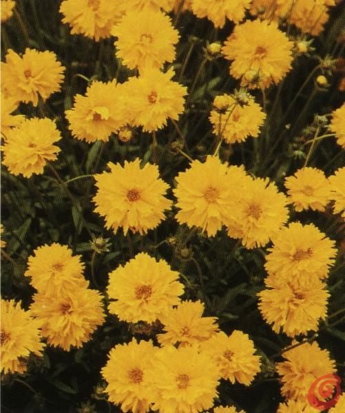 I consigli dell'esperto: come fare perché le piante perenni del nostro giardino fioriscano abbondantemente.