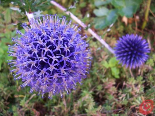 Molte piante perenni sono anche dei bei fiori da recidere.