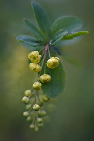 Il concorso internazionale per il fotografo di giardini dell'anno è dedicato ai motivi di giardinaggio, ai giardini, alla fotografia botanica ecc. Galpa Ltd e Royal Botanic Garden Kew