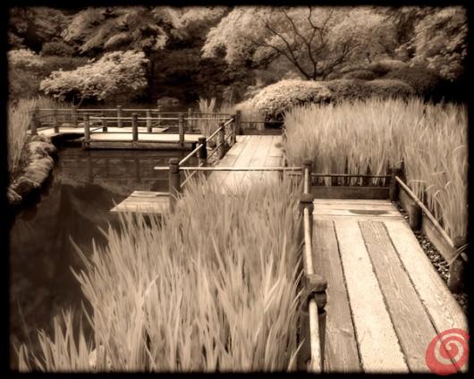 concorso internazionale di fotografia sul tema dei giardini è dedicato ai motivi di giardinaggio, ai giardini, alla fotografia botanica ecc. Viene organizzato da Galpa Ltd. in collaborazione con Royal Botanic Gardens Kew in Gran Bretagna - giardino giapponese con stagno