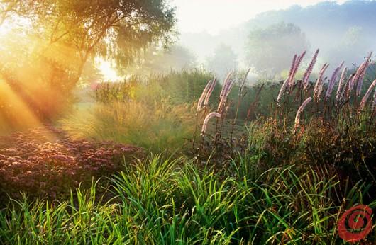 concorso internazionale di fotografia sul tema dei giardini è dedicato ai motivi di giardinaggio, ai giardini, alla fotografia botanica ecc. Viene organizzato da Galpa Ltd. in collaborazione con Royal Botanic Gardens Kew in Gran Bretagna - giardino con piante perenni