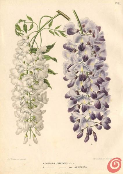 Il giardino in fioriera 19: gli alberi e gli arbusti fioriti