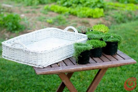 Un vecchio vassoio in vimini si trasforma in un giardino in miniatura.