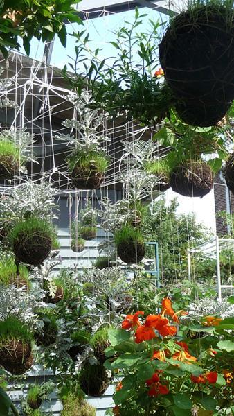 Kokedama, i giardini da appendere