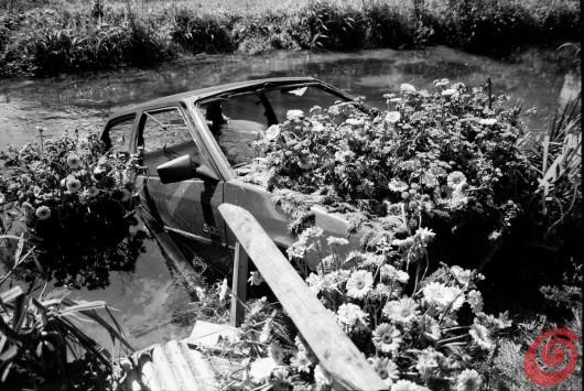 Una mostra ironica sull'impiego dell'automobile e delle sue parti per addobbare il giardino. Che va a toccare anche l'argomento delle auto abbandonate in mezzo alla natura.