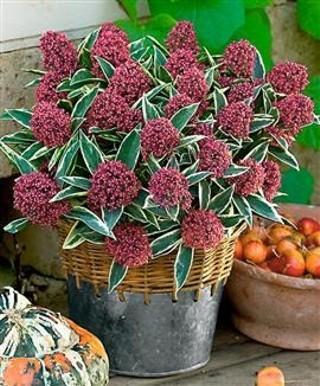Il giardino in fioriera 18, i fiori in vaso per l'autunno
