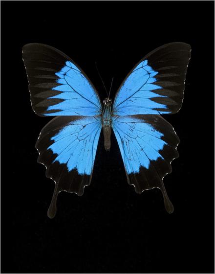 Il fotografo Dawid. Le sue foto di scarafaggi e farfalle. Insetti, insomma.
